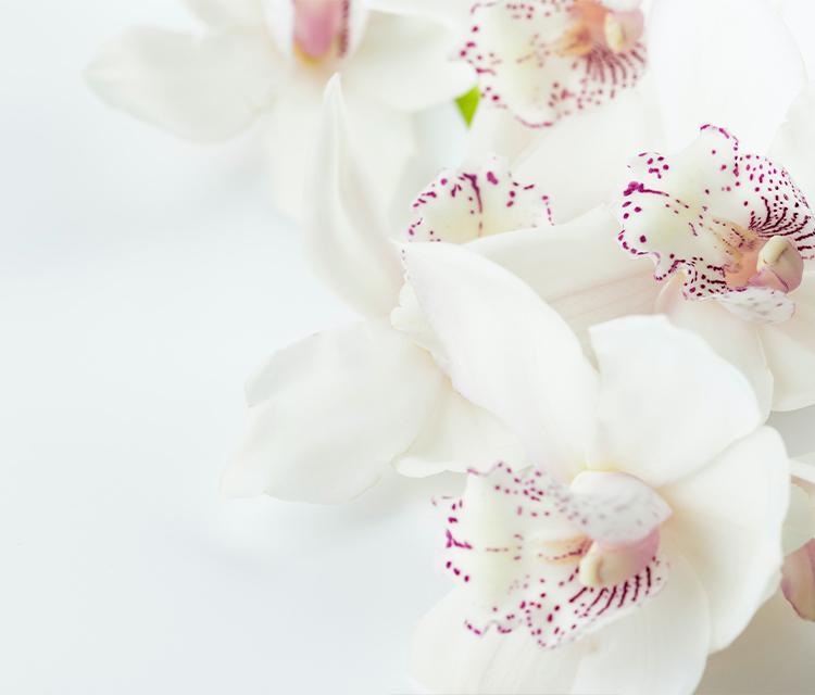 【開店祝い】お花屋さんが教える開店祝いのこと【お花のギフト】