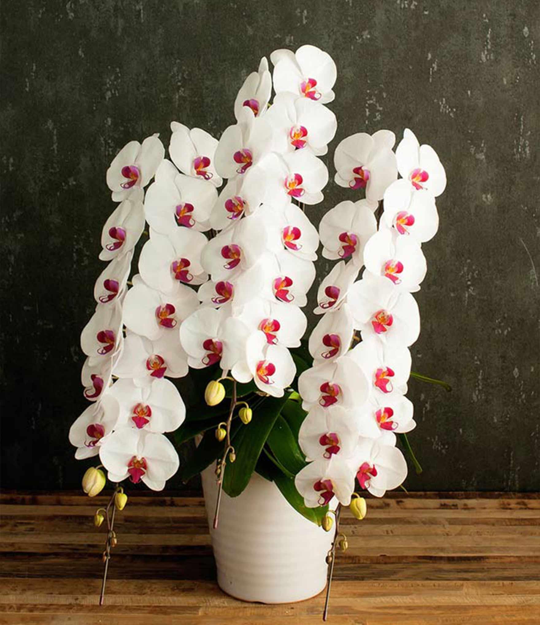 お花の窓口の胡蝶蘭回収サービス