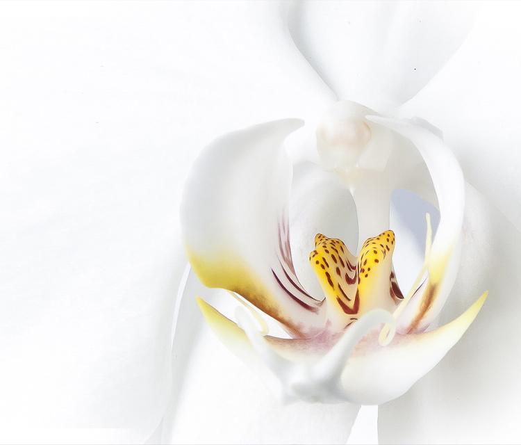 胡蝶蘭のお花が終わったらどうしたらいい? コンシェルジュオススメの方法とは
